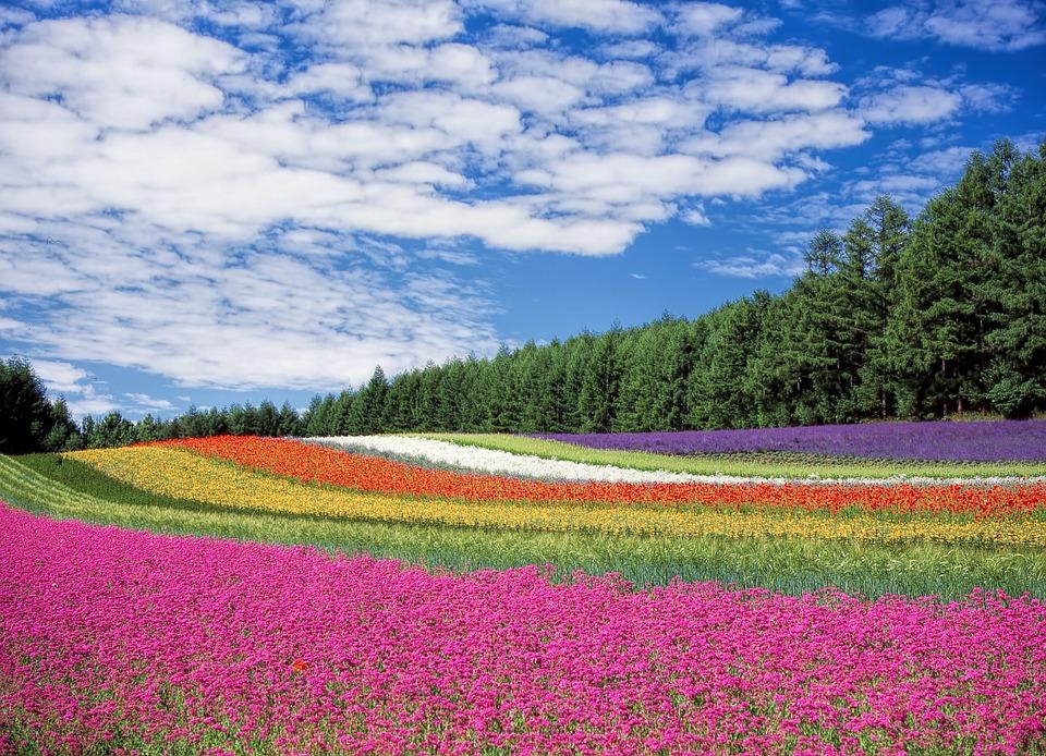 Цветна градина в Япония
